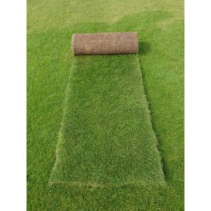Premium Roll Out Grass