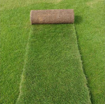 dublin lawn turf